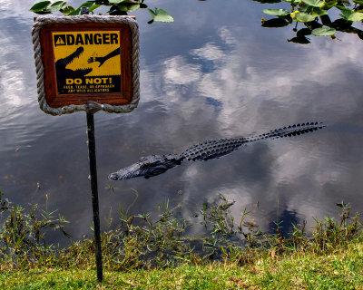 Too close for comfort, Everglades National Park, Florida, 2013