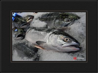 Mr. Salmon