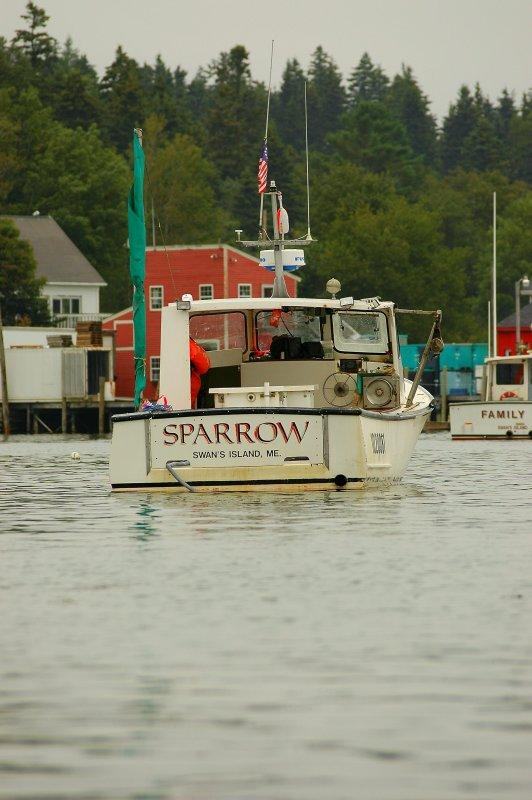 Sparrow - Burnt Coat Harbor
