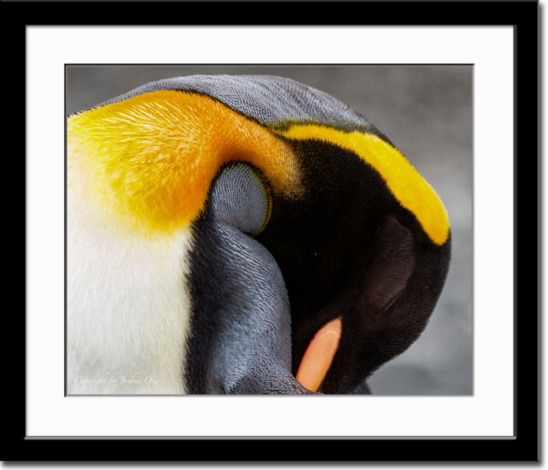 Details of a Sleeping Penguin