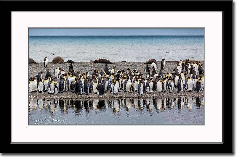 Reflecting Penguins LOL