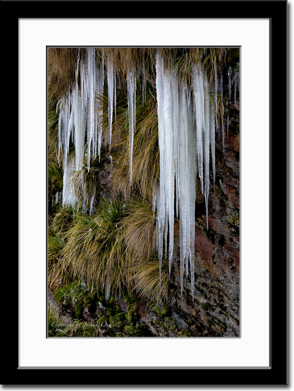 Icicles on Grass