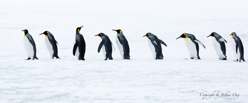 Penguin March
