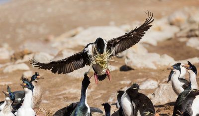 Carrying Nest Material