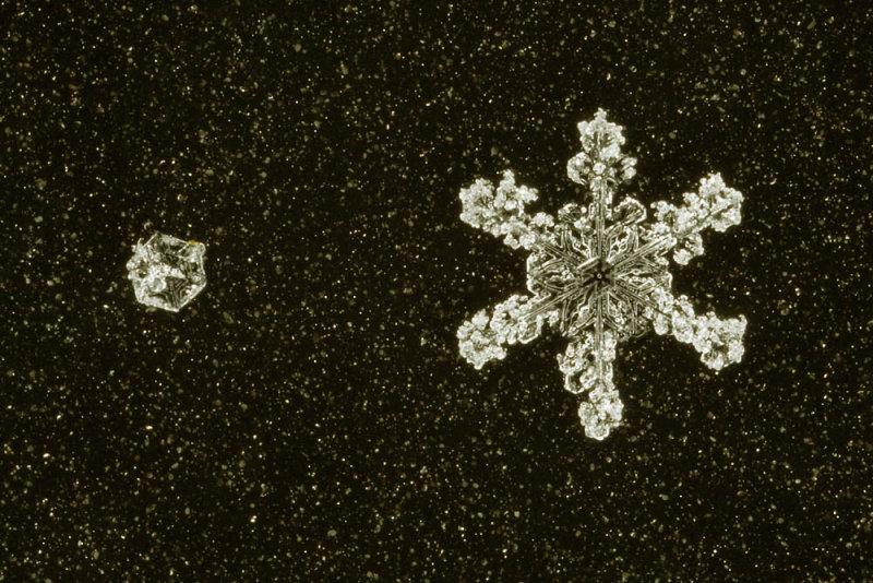 snowflake (IMG_2349ok.jpg)