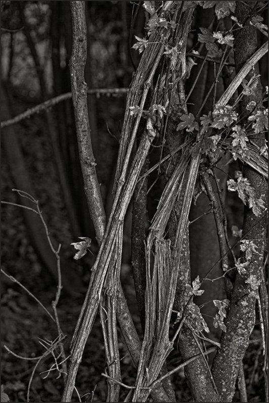 Lago di Como forest abstract