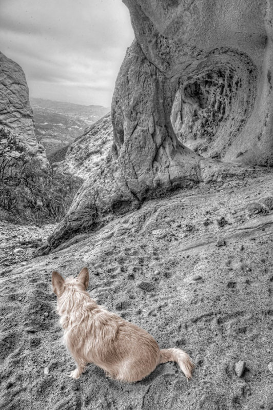 Mona surveying her new territory from a cave at Corral Canyon