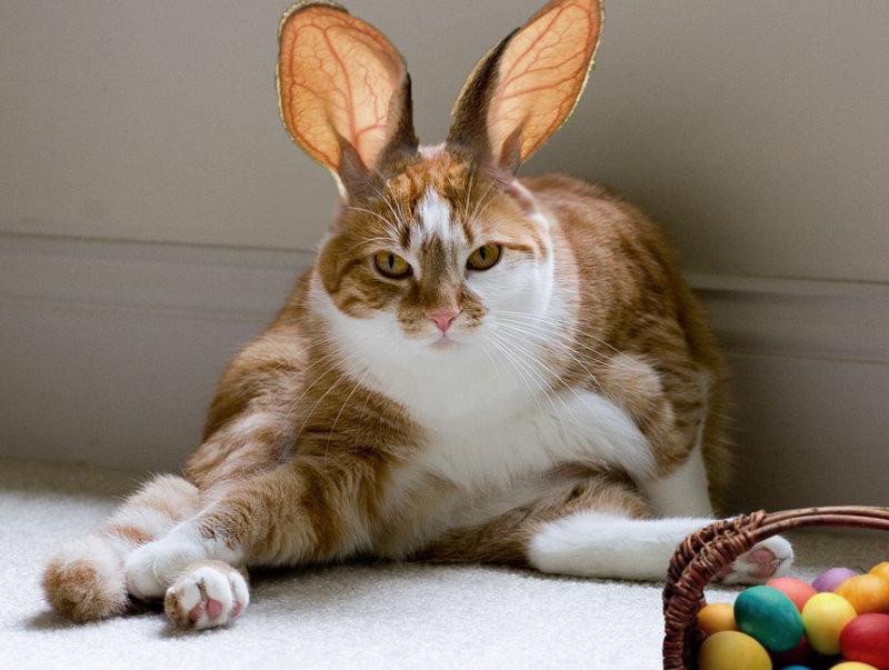 Easter Beegie