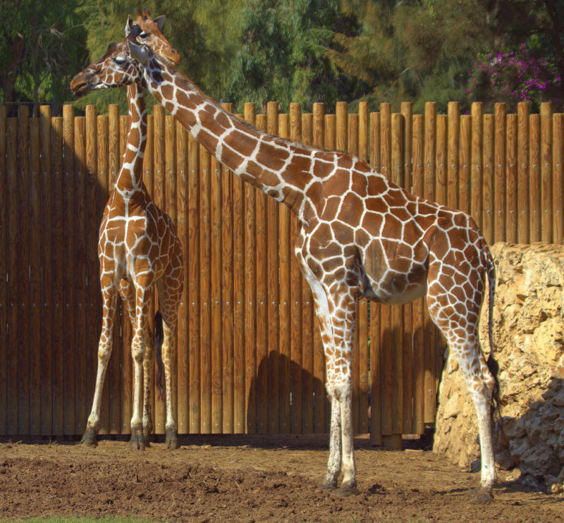 A mothers love at Safari Park