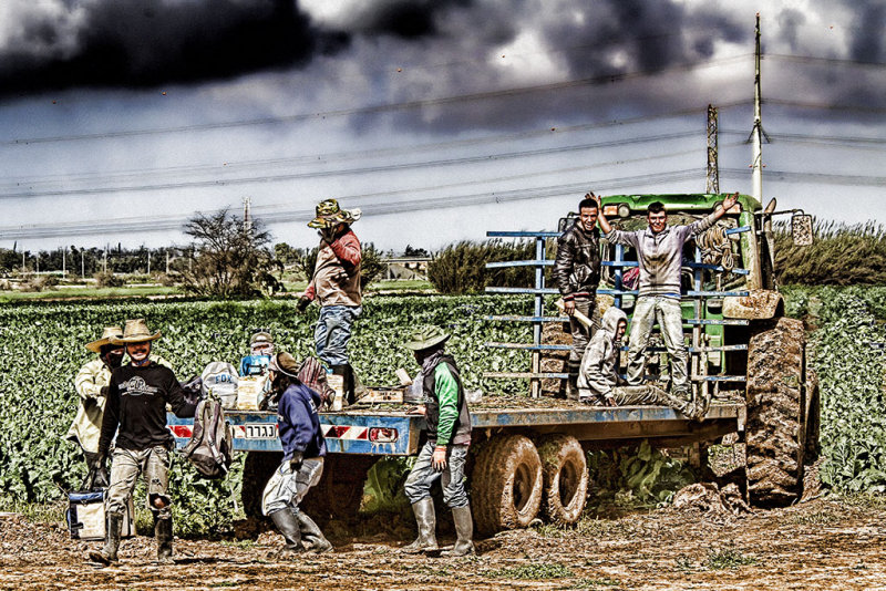 Harvesting Season.jpg