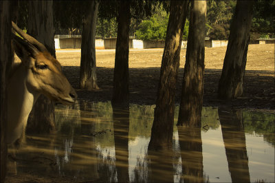 Light and Shadows at Safari Park.jpg