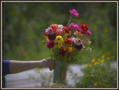 Self-Picking Flowers in Mishmar Hasharon