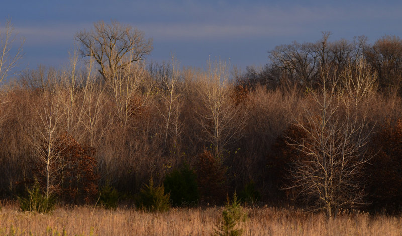 Wooded Area in Fall Colors