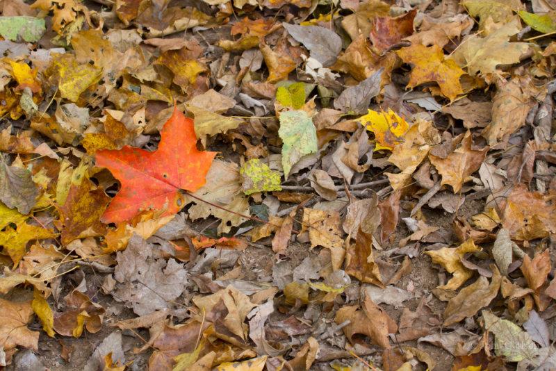 WV Leaves-7641.jpg