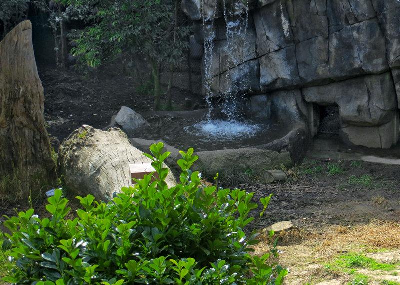 Tigers habitat. #0790