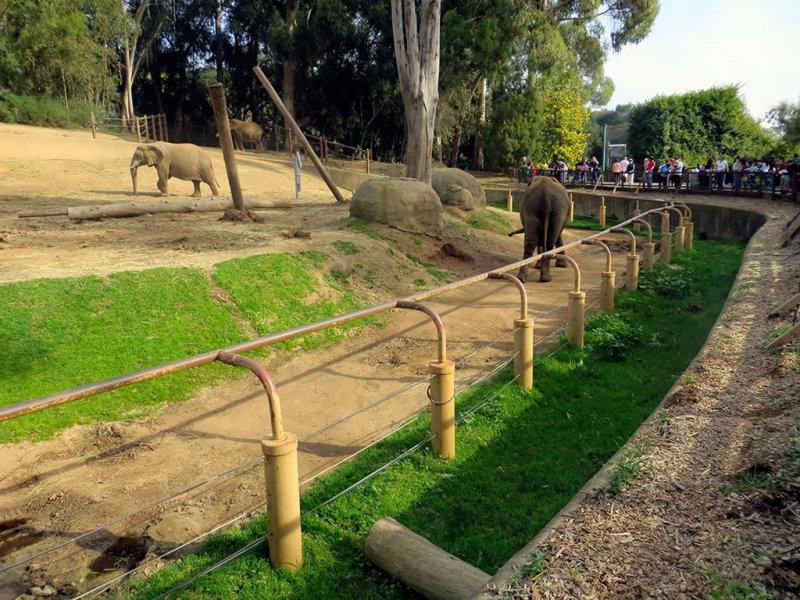 The elephant grounds. #0881