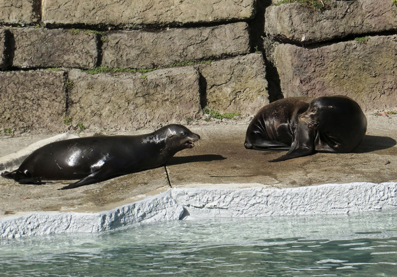 The zoo rescued two blind sea lions. 1270.