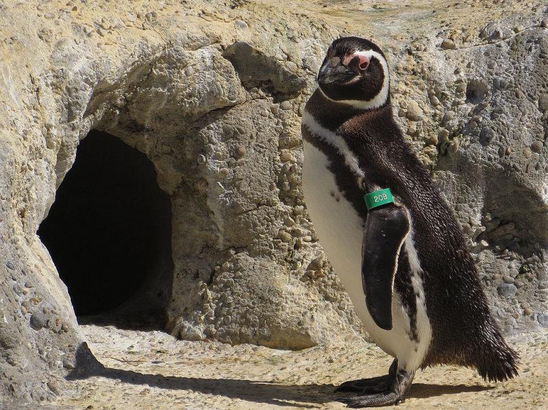 So, stopped at Penguin Island. mImg_1659.jpg