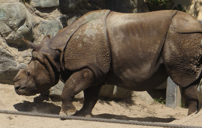 Paused at Indian rhinoceros area. mImg_1689.jpg