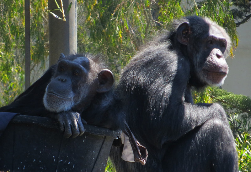 The zoo visitors can be pretty boring. mImg_1701.jpg