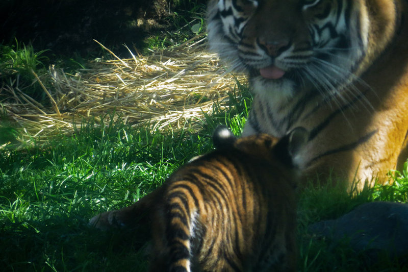 Cubs view of mama. mImg_1928r.jpg