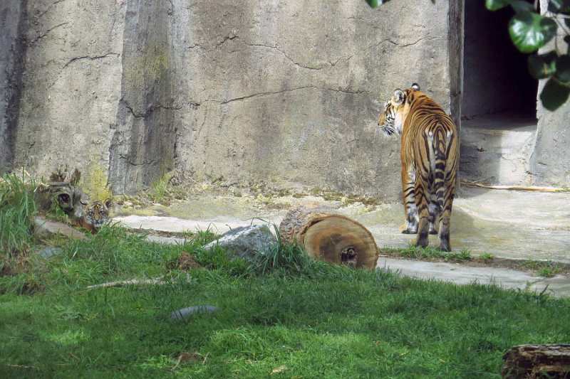 But they came back out after 4pm.  Cub on left. mImg_2482.jpg