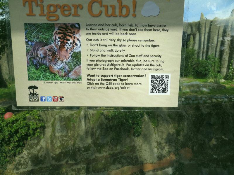 Tiger cub & Mom - and that plexiglass