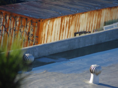 Rooftops. 500mm-equiv. Day 3, w/ Superfine compression.  0208