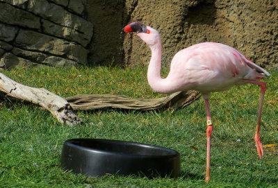 Pink Flamingo. 0778