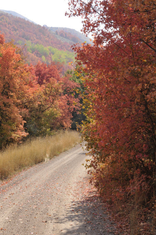 Autumn at City Creek _DSC7159.jpg