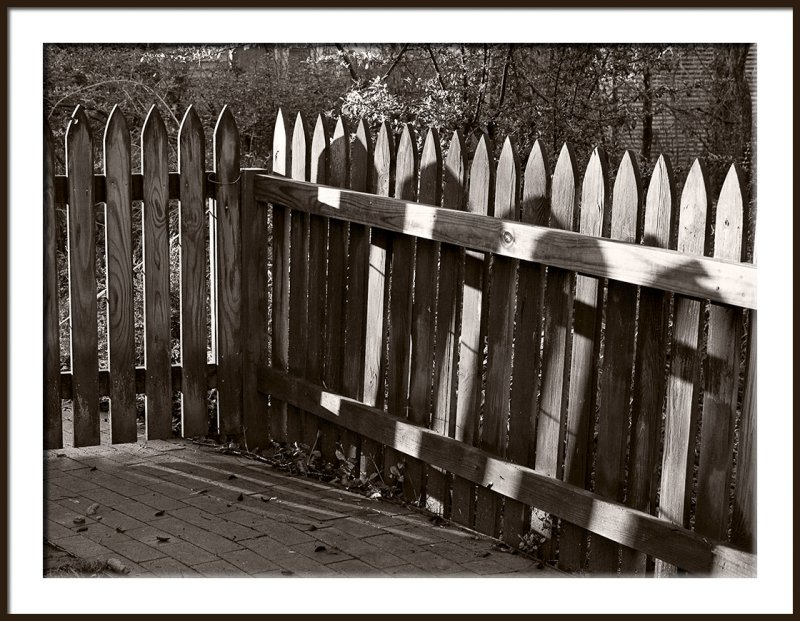 Morning Fence