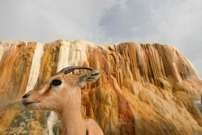 gazelle.hamam meskhoutine guelma,algerie