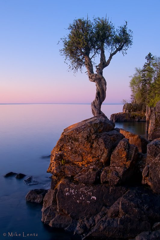 Witch Tree aka Little Cedar Spirit Tree - a 400 year old tree sacred to the Ojibwa Indians
