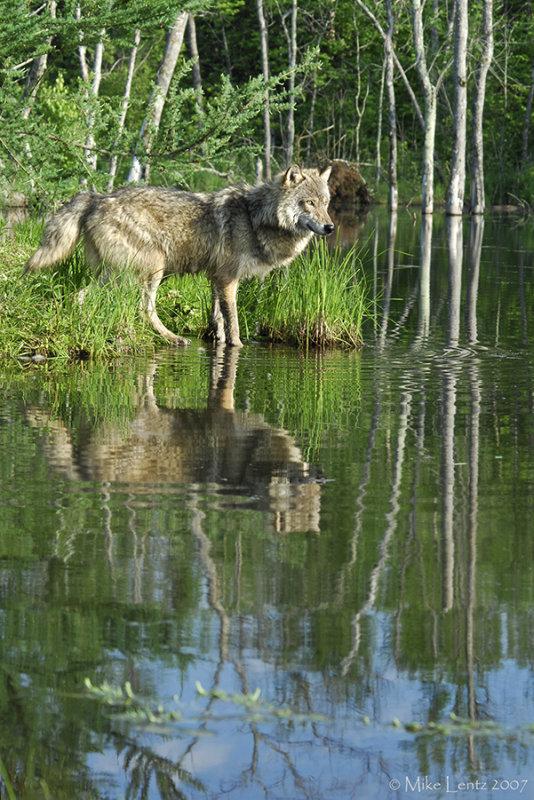 Wolf island view