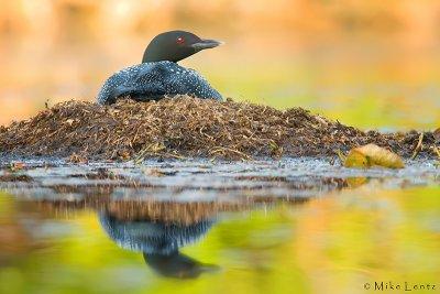 golden reflection on nest