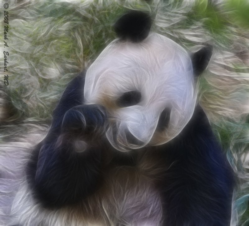 Fuzzy Wuzzy Wuz A Panda