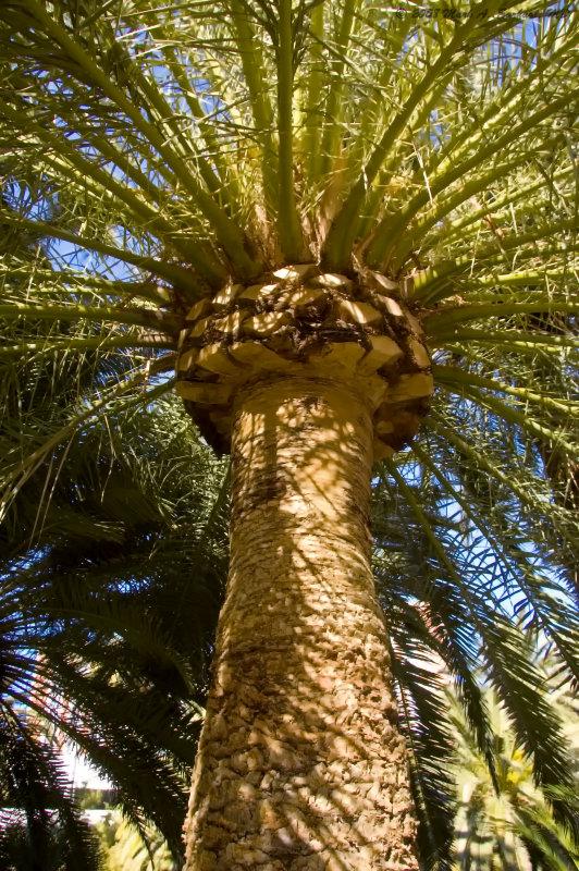 The Palms In Las Vegas