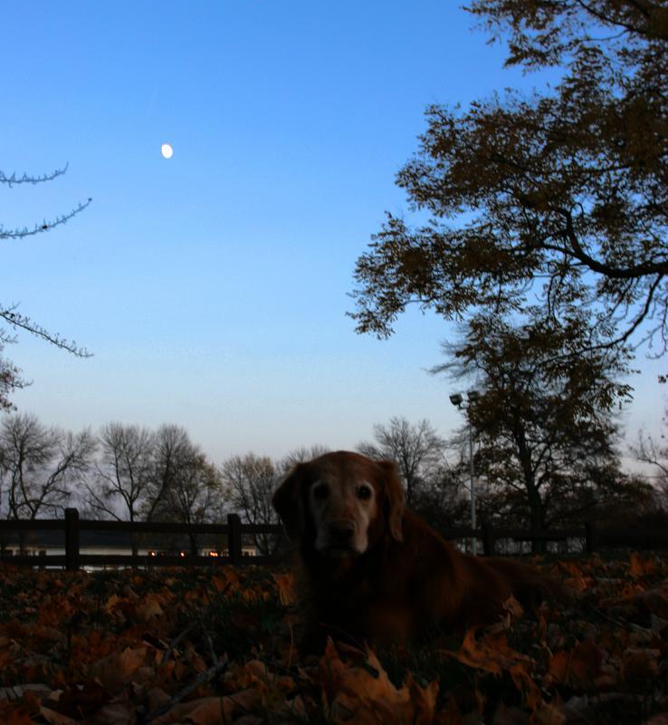 Mollie moonlight