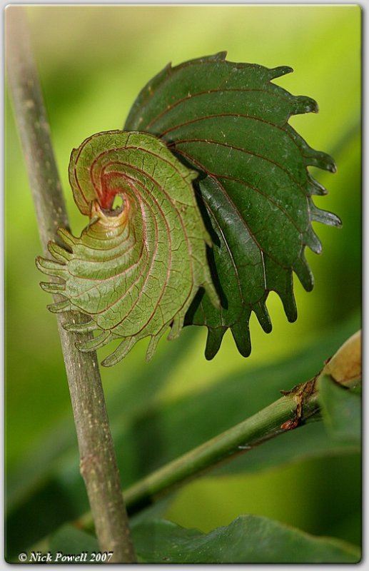 Swirly Leaves