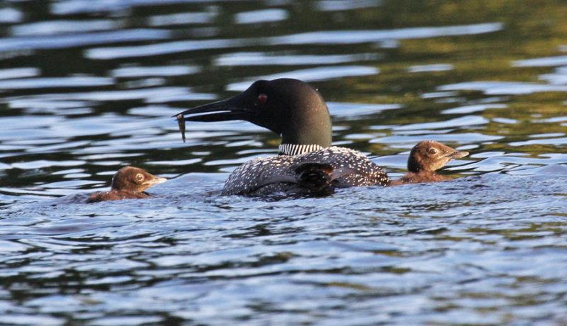 lac veillot-IMG_0630-famille-900.jpg