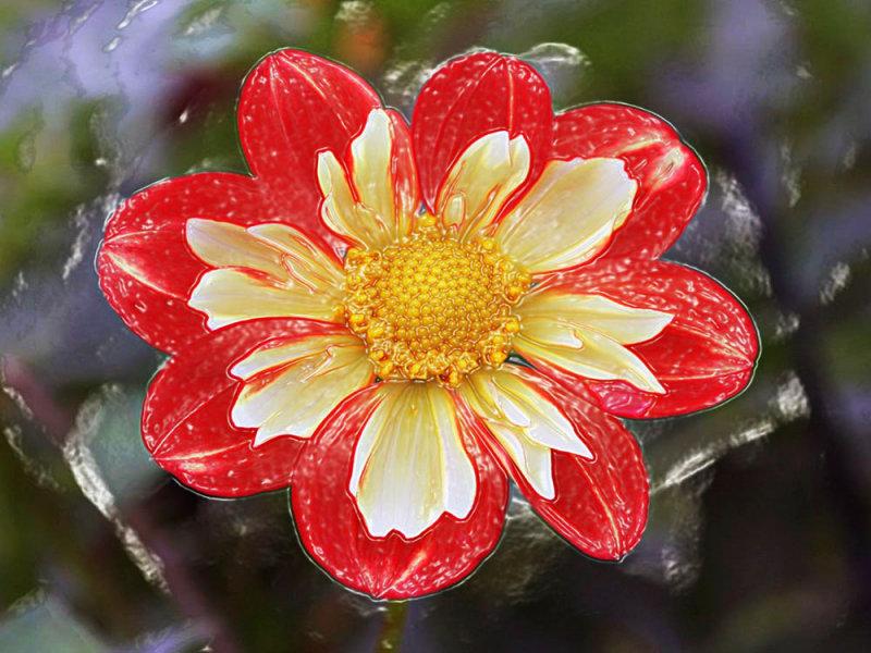 IMG_4520 copy---fleur-1000.jpg