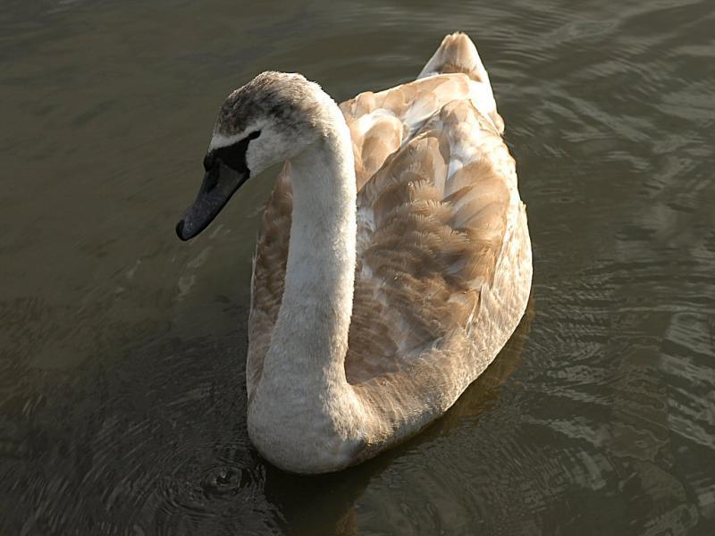 Swan 38.jpg