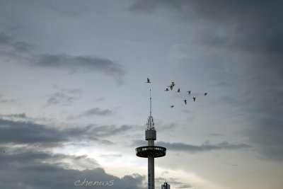 Egrets fly by the tower (7560)