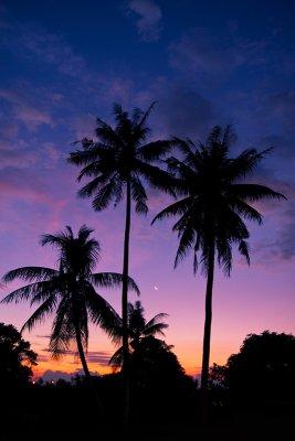 Beautiful sunset (6336)