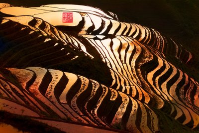 Terraced rice fields (China)