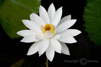 Flower-1 (Jan 06)