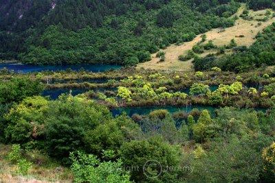 Potted Landscape (Aug 06)