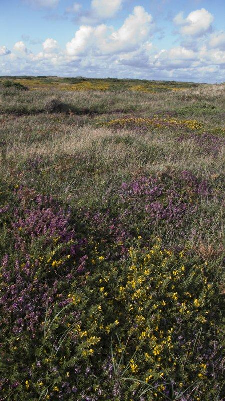 Pembroke heath