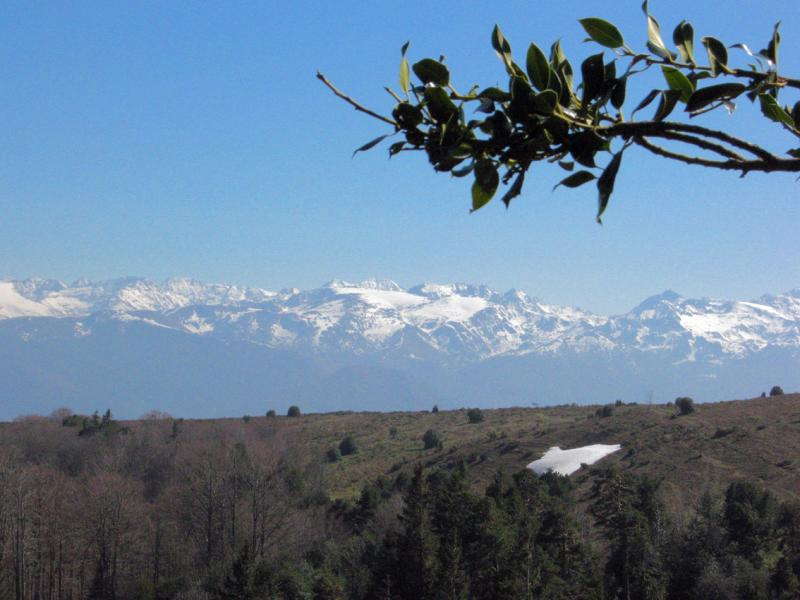 Snow clad Pyrenees and holly beyond ridge
