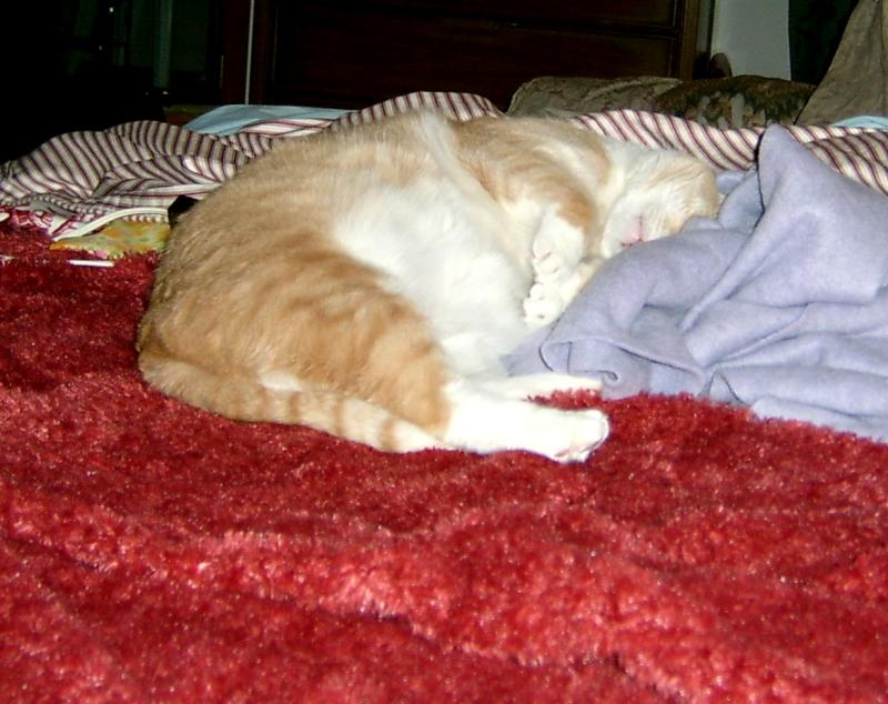 Catso Asleep